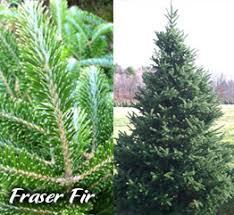 Ruffu0027s Christmas TreesTypes Of Fir Christmas Trees