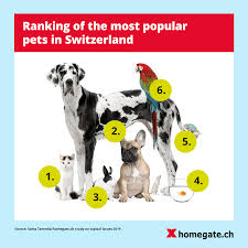 Most Popular Pets Animal Lovers Almost Half Of The Swiss Population Owns A