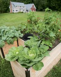 Kitchen Scrap Gardening The Gilmer Mirror Grow More Edibles With Smart Sustainable