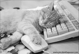 """Résultat de recherche d'images pour """"chat qui dit dort"""""""