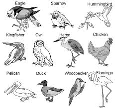 Bird Beak Chart Bird Beaks And Feet