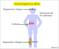 Alcohol Content In Blood Breath Saliva And Urine Ethyl