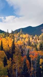 autumn mountains backgrounds. Fall Nature Mountain Wood Forest Tree Sky Summer #iPhone #6 #plus #wallpaper Autumn Mountains Backgrounds Y
