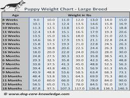 Poodle Puppy Weight Chart Puppy Weight Chart This Is How Big Your Dog Will Be