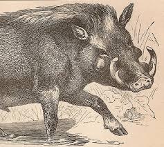 German Wild Boar Hunting Pinterest Wild Boar Hunting Art