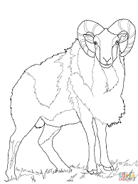 Small Picture Wild Sheep Mouflon coloring page Free Printable Coloring Pages