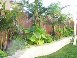 Small Picture Tropical Landscaping Ideas buddyberriesCom