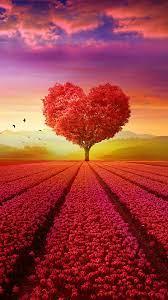 Heart Tree Field 4k In 1080x1920 ...