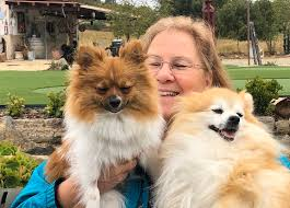 "Kellie Sims on Twitter: ""I've got these 2 beauties to keep me company!  #Gemma #Gella #Poms… """