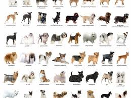 dog breeds and names breed of dog dog breed names and pictures dog names of