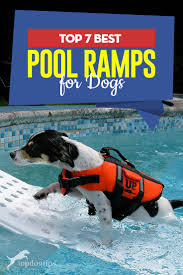 the 7 best dog pool ramp brands