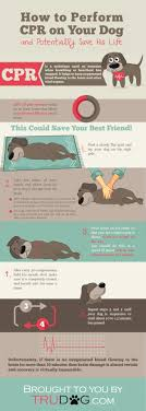 Data Chart How Dog Cpr Could Potentially Save Your Pets