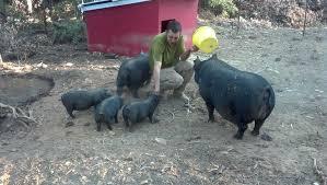winter pig waterer 2 9 8 diy winter pig waterer