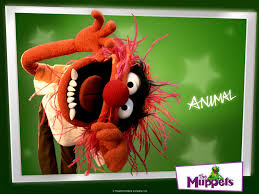 animal muppet wallpaper. Beautiful Wallpaper The Muppets Images Animal HD Wallpaper And Background Photos And Muppet Wallpaper 0