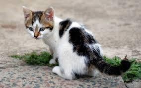 Resultado de imagem para foto de gato