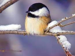 Free Winter Birds Desktop Wallpaper on ...