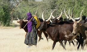 Image result for fulani radio in nigeria