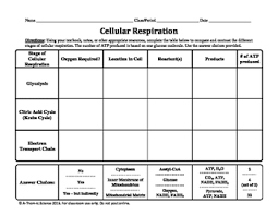 Complete The Chart For The Stages Of Cellular Respiration Cellular Respiration Chart