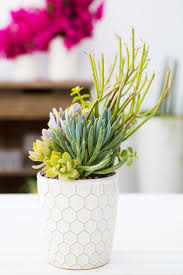 a_house_in_the_hills_modern_patio_makeover-23. Potted SucculentsSucculent  ArrangementsSucculent ...