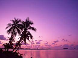 Pink Beach Sunset Desktop Wallpaper ...