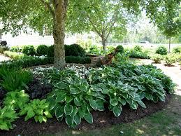 Landscaping Ideas For Small Slopes   Full Shade Garden Ideas Photograph    Shade Gardens
