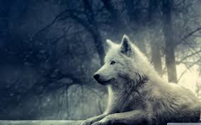 white wolf wallpaper. Exellent Wolf Wide 1610 To White Wolf Wallpaper O
