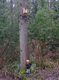 alex and his owl nest box all ready for a screech owl pair