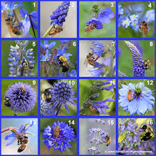 blue bee flowers