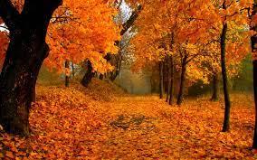 Autumn Foliage Wallpapers - Top Free ...