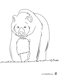 Big Brown Bear Coloring Page More