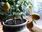 Как посадить какой в домашних условиях