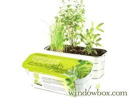 in home herb garden kit kitchen herb garden kit herbs kitchen herb garden kit home depot