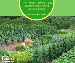 Vegetable Companion Planting Charts Vegetable Companion Planting Thebunza Co