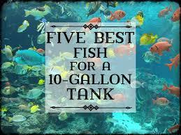 Fun Fish Tank Decorations Best Fish For A 10 Gallon Tank Setup Pethelpful