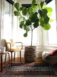 best tall indoor plants tall house plants tall house plant tall indoor trees inside best large best tall indoor plants