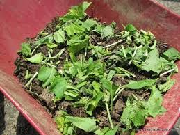 fertilizer for garden. comfrey is a powerhouse in the garden--attracting pollinators and beneficial insects, providing fertilizer for garden