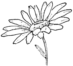 Small Picture Drawing the Daisy How to Draw Daisies with Easy Step by Step