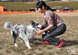 Resultado de imagen para 犬  Australian Shepherd