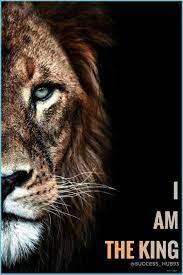 Lion Quotes Lion Photography, Lion ...