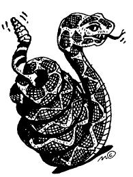 rattlesnake head clip art. Contemporary Head Rattlesnake Head Clipart Rattlesnake Throughout Clip Art R