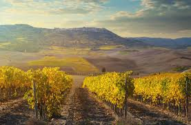 The 2014 Brunello Vintage Overcomes Difficult Conditions