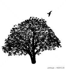 木のシルエット のイラスト素材 4604118 Pixta