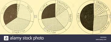 Categories Of Weight Stock Photos Categories Of Weight