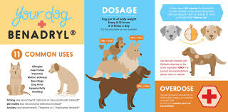 Benadryl For Dogs Usage Safety Dosage Side Effects
