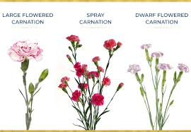 Flower Seed Germination Time Chart A Guide To Growing Carnations Ftd Com