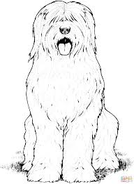 Old English Sheepdog Coloring Page From