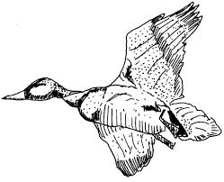 Dessin Coloriage Animal Canard En Vol Education Environnement