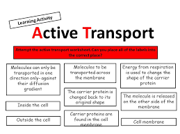 Cell-membrane-worksheet & Cell Transport Worksheet Awesome Cell ...
