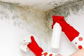 to clean mold off walls