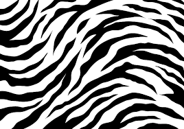 Tiger Pattern Adorable White Tiger Stripes Download Free Vector Art Stock Graphics Images